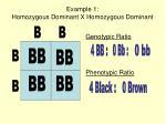 example 1 homozygous dominant x homozygous dominant