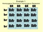 example 1 homozygous dominant x homozygous recessive