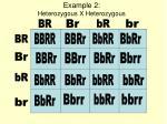 example 2 heterozygous x heterozygous