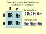 example 7 incomplete dominance pink flower x red flower