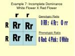 example 7 incomplete dominance white flower x red flower
