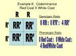 example 8 codominance red coat x white coat