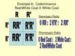 example 8 codominance red white coat x white coat
