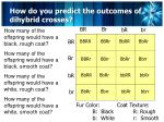 how do you predict the outcomes of dihybrid crosses5