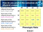 how do you predict the outcomes of dihybrid crosses6