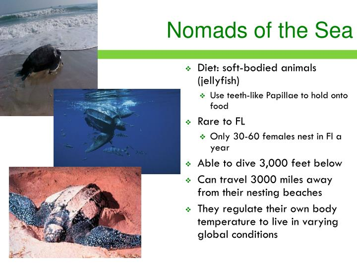 Nomads of the Sea