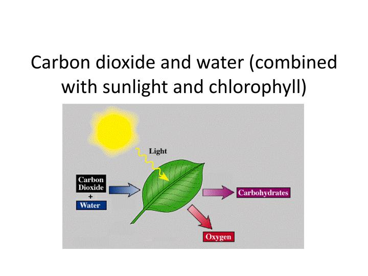 Carbon dioxide and water (combined with sunlight and chlorophyll)