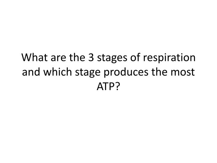 What are the 3 stages of respiration and which stage produces the most ATP?