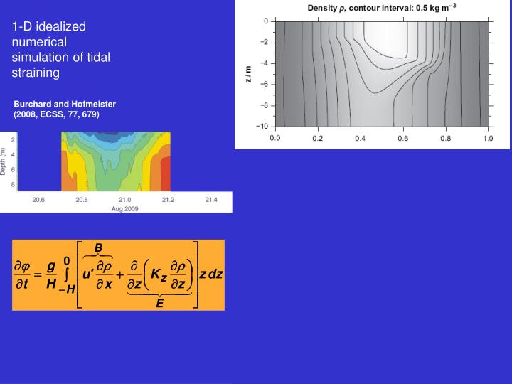 1-D idealized numerical simulation of tidal straining