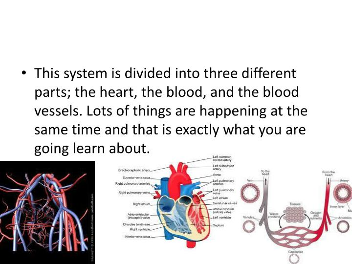 This system is divided into three different parts; the heart, the blood, and the blood vessels. Lots...