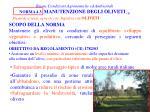 buone condizioni agronomiche ed ambientali norma 4 3 manutenzione degli oliveti 1