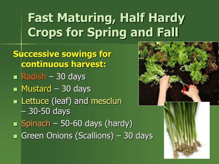 Fast Maturing, Half Hardy Crops for Spring and Fall