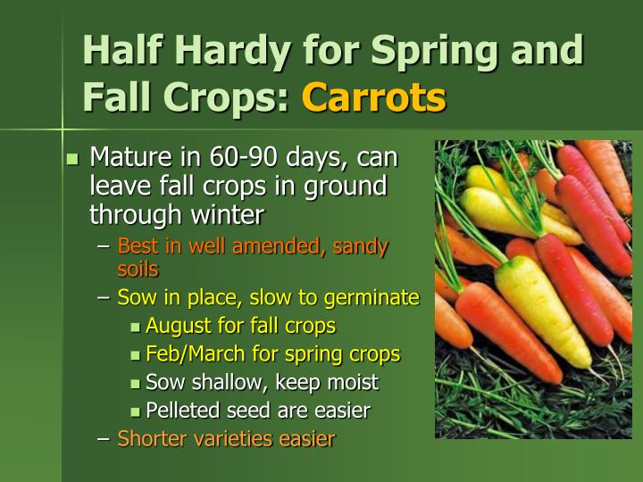 Half Hardy for Spring and Fall Crops: