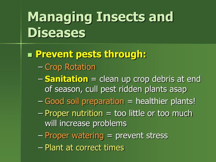 Managing Insects and Diseases