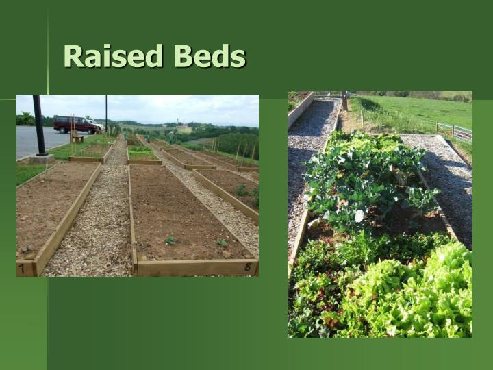 Raised beds1