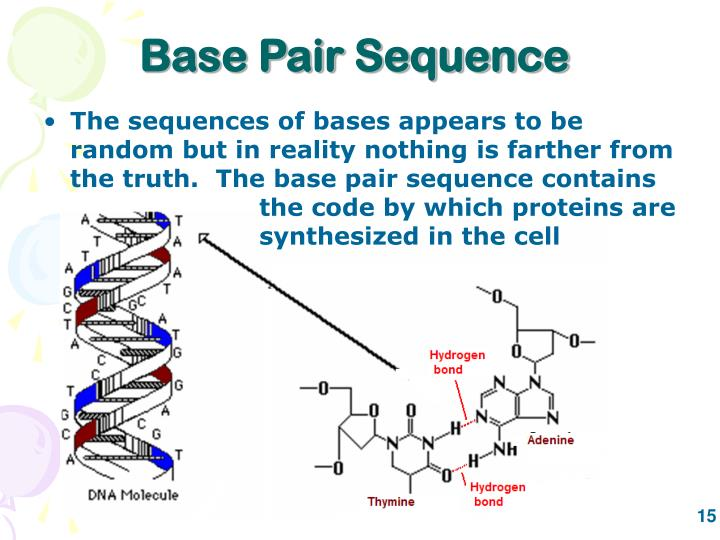 Base Pair Sequence