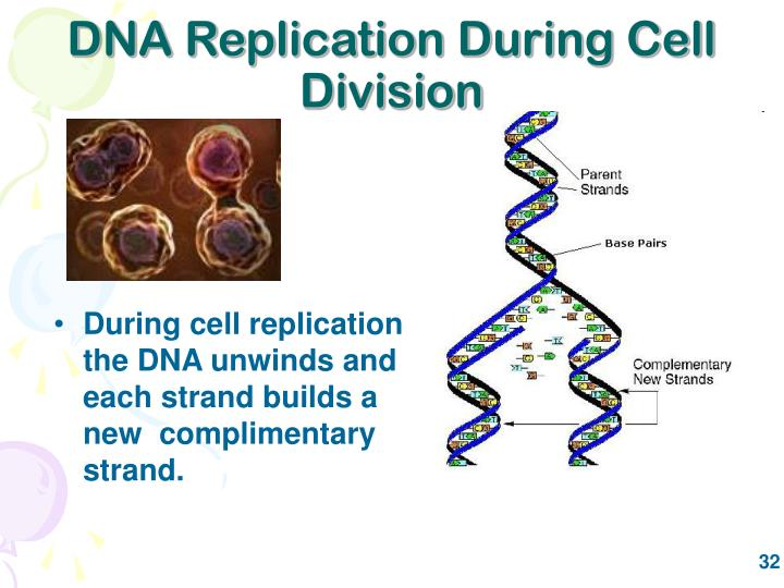 DNA Replication During Cell Division