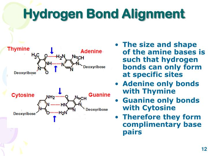 Hydrogen Bond Alignment