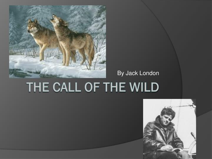 "the call of jack london essay For example, it has been said that jack london was an admirer of the works of   quotations from ""the call of the wild will help you work with the essay topics."