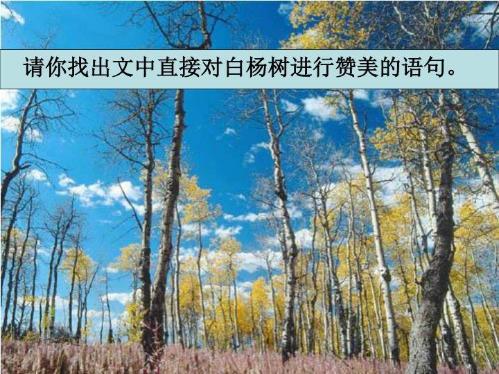请你找出文中直接对白杨树进行赞美的语句。