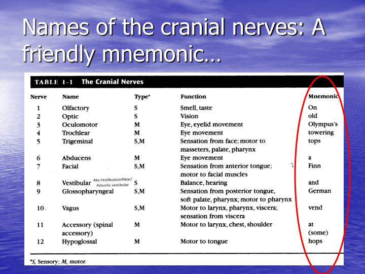 Names of the cranial nerves: A friendly mnemonic…