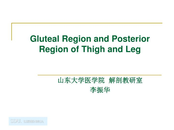 gluteal region and posterior region of thigh and leg n.