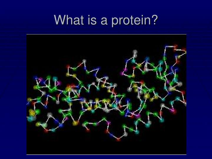 What is a protein