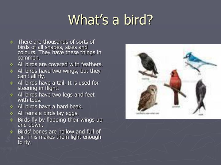 What s a bird
