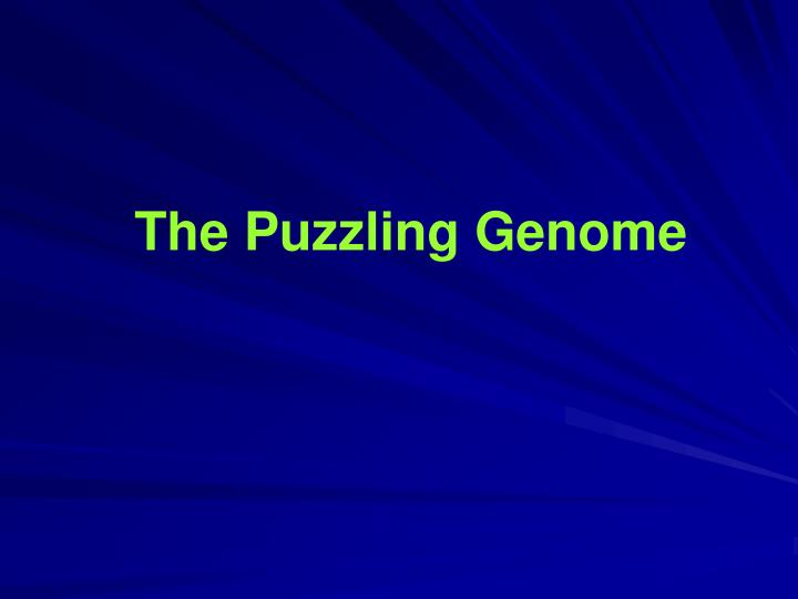 The Puzzling Genome