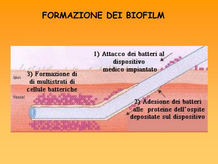 FORMAZIONE DEI BIOFILM