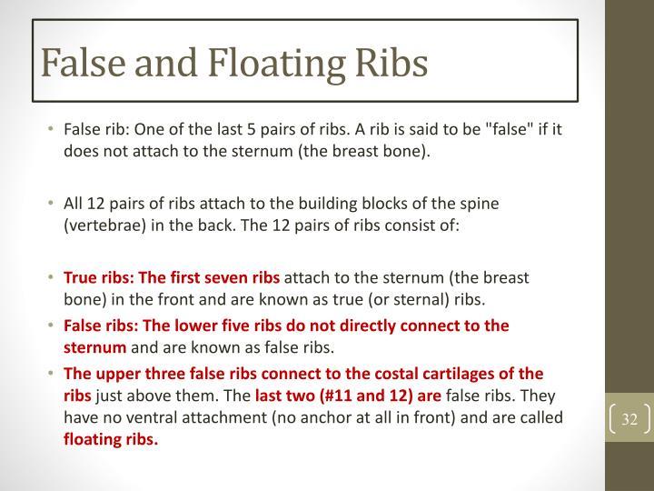 False and Floating Ribs