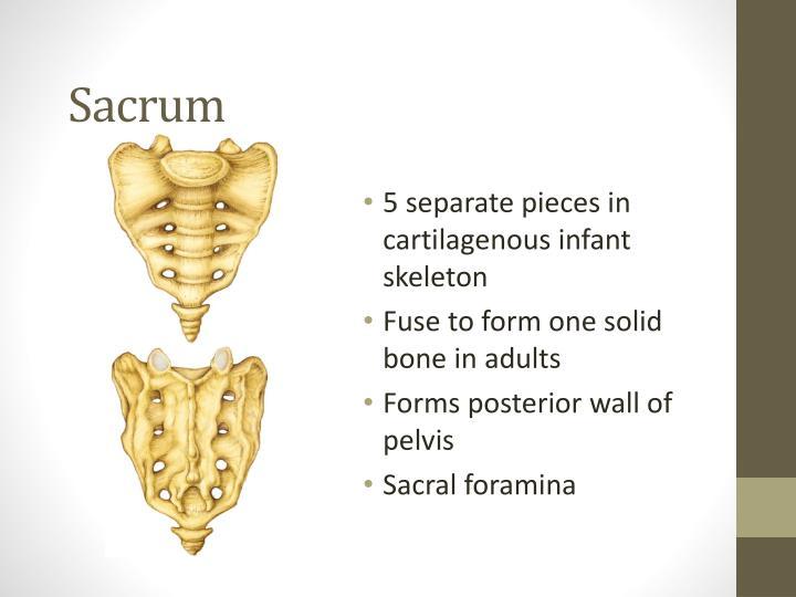 Sacrum