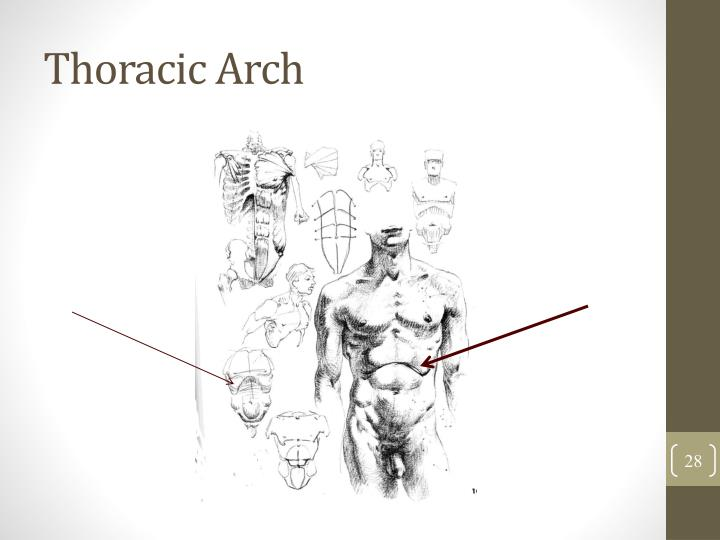 Thoracic Arch