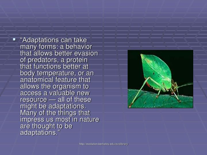 """""""Adaptations can take many forms: a behavior that allows better evasion of predators, a protein that functions better at body temperature, or an anatomical feature that allows the organism to access a valuable new resource — all of these might be adaptations. Many of the things that impress us most in nature are thought to be adaptations."""""""