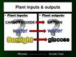 plant inputs outputs
