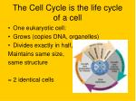 the cell cycle is the life cycle of a cell