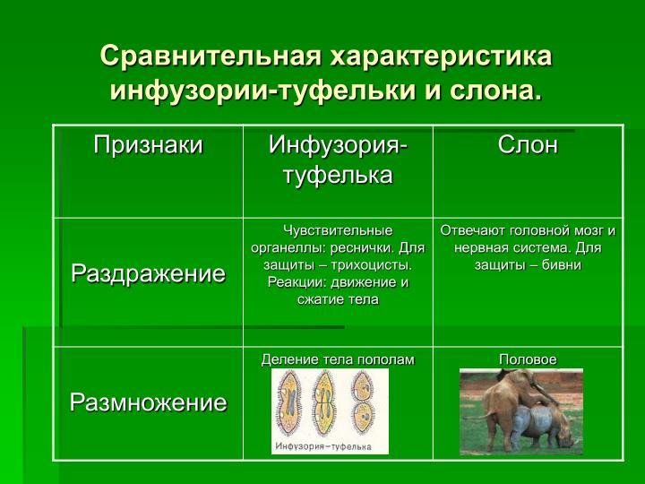 Сравнительная характеристика инфузории-туфельки и слона.