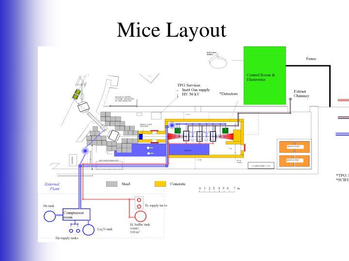 Mice Layout