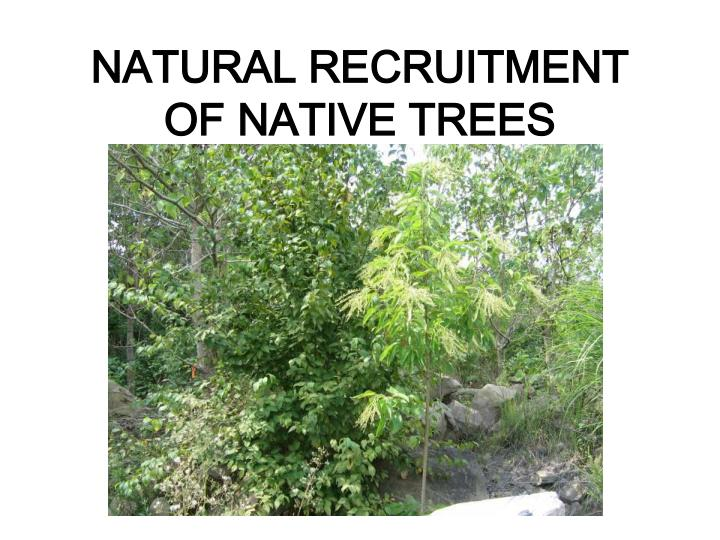 NATURAL RECRUITMENT OF NATIVE TREES