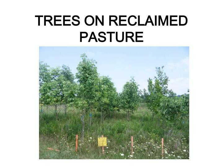 TREES ON RECLAIMED PASTURE