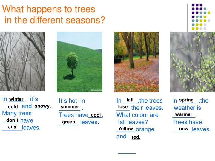 What happens to trees