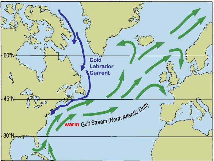 Cold Labrador         Current