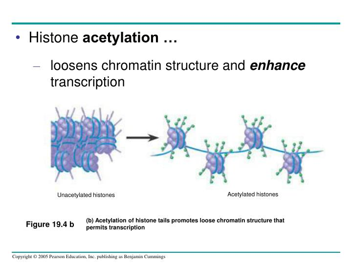 Acetylated histones