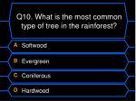 q10 what is the most common type of tree in the rainforest