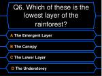 q6 which of these is the lowest layer of the rainforest