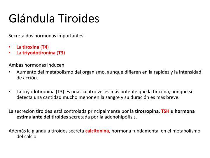 Gl ndula tiroides