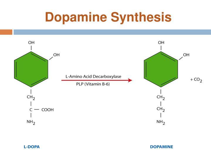 Dopamine Synthesis