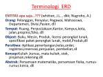 terminologi erd1