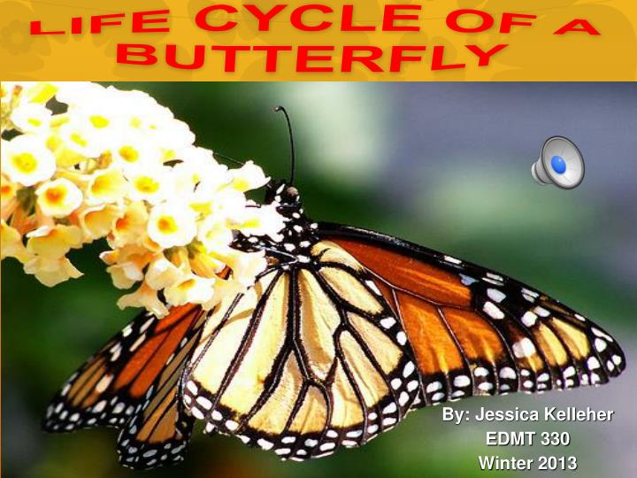 life cycle of a butterfly n.