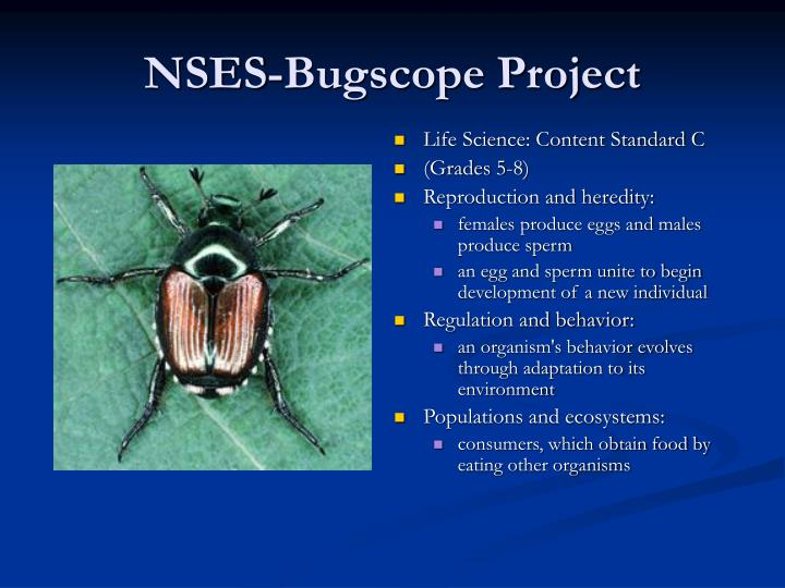 NSES-Bugscope Project